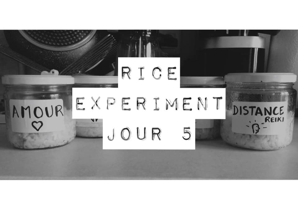 Rice Experiment – J5