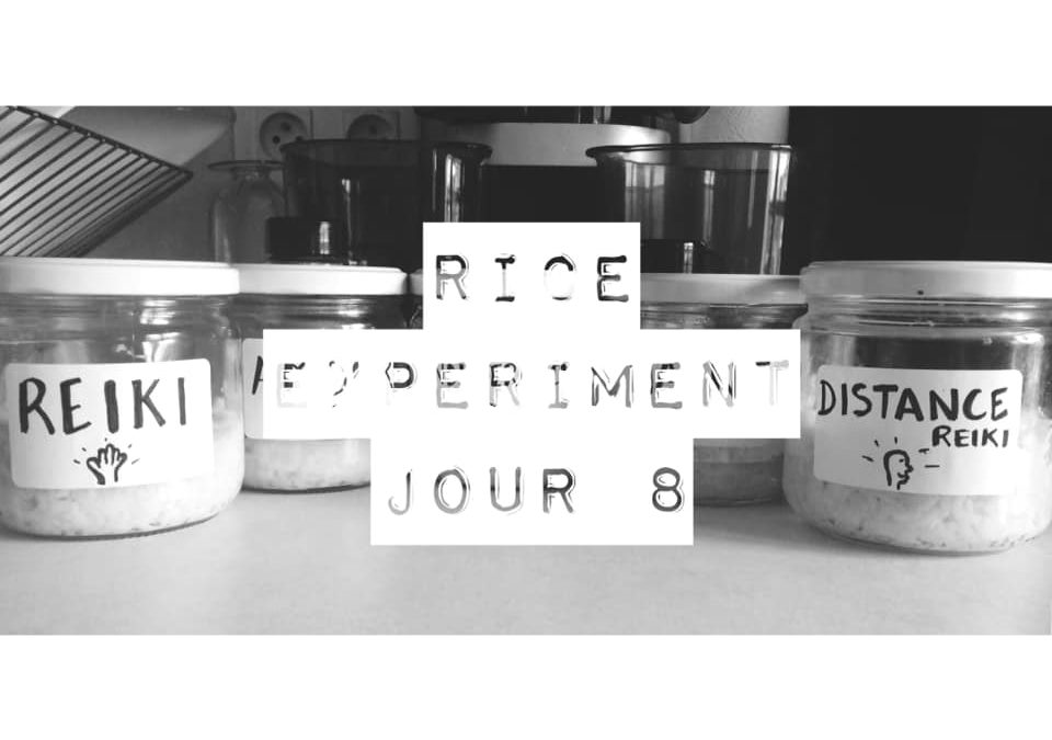 Rice Experiment – J8